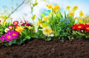 NEMA VIŠE ČUPANJA: Zauvijek uklonite neželjenu travu iz bašte, a da cvijeće ostane netaknuto!