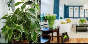10 kućnih biljaka koje će pročistiti zrak u vašem domu