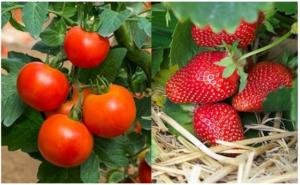 Evo kako sa SODOM BIKARBONOM da spasite voće i povrće od propadanja