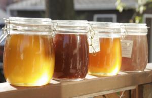 Koji MED uzimati za određene tegobe? Za što su dobri bagremov, lipov, šumski ili cvjetni med…