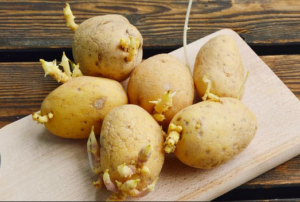 Kako da vam krompir ne proklija brzo: Super trik za sve domaćice!