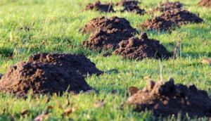 ZAŠTITITE BAŠTU OD KRTICE: 5 načina da otjerate krtice u komšijsko dvorište