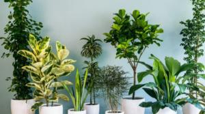 Žalite se da vam sobne biljke uopšte ne rastu? Sipajte OVU namirnicu u zemlju
