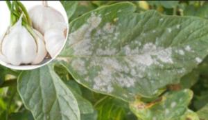 Top 20 PRIRODNIH peparata za ZAŠTITU biljaka od bolesti i štetočina