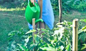Što sijati i saditi u JULU – povrćarski radovi u julu