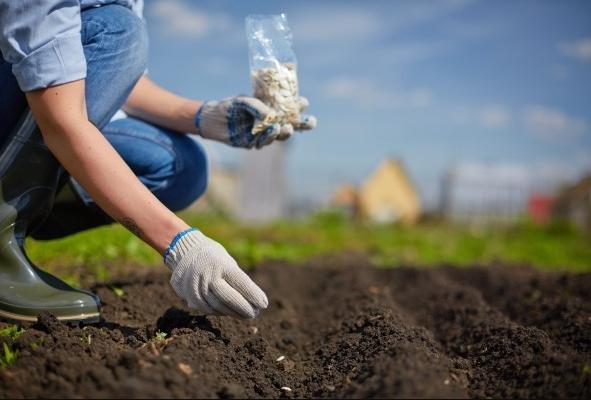 Evo koje povrće možete sijati/saditi u AVGUSTU!