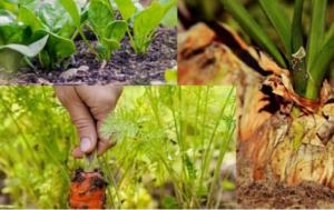 Pet vrsta povrća koje se sadi u kasno ljeto?