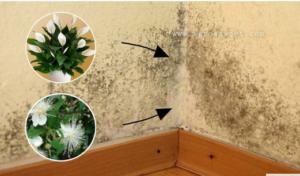 Zaboravite na VLAGU u kući uz ove sobne biljke