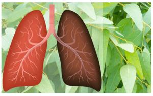 Biljke koje iscjeljuju i čiste pluća, liječe astmu, kašalj, bronhitis
