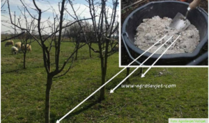 Evo kako koristiti pepeo za đubrenje voćaka