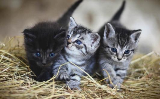 Zašto vas mačke čekaju pred vratima kada se vratite kući