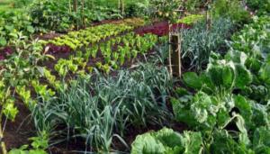 Napravite svoju bašticu – 5 biljaka koje je lako uzgajati