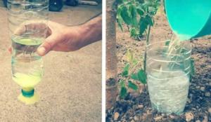 Sistem za NAVODNJAVANJE biljaka pomoću PLASTIČNIH flaša