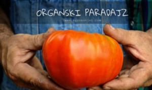 Organski uzgoj PARADAJZA – Sve od sjetve do berbe!