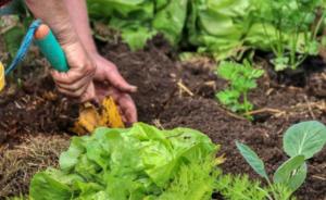Obratite pažnju – 9 parova biljaka koje nikada ne bi trebalo saditi zajedno!