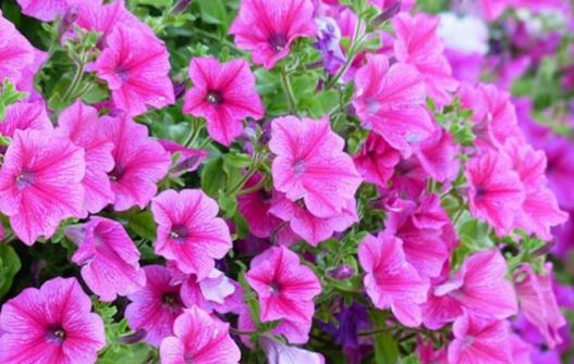NAPRAVITE OVU PRIHRANU U PROLJEĆE PRIJE CVJETANJA – Jača biljke iz korijena, pospješuje olistavanje i bujno cvjetanje