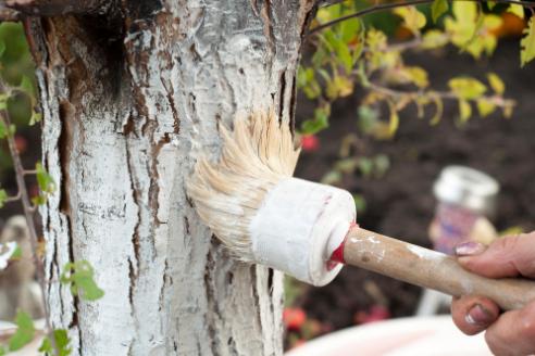 Evo zašto je bitno OKREČITI stabla VOĆAKA – uradite pravovremenu zaštitu!