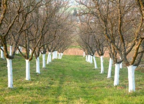 Radovi u voćnjaku po mjesecima – KALENDAR VOĆA