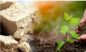 Kvasac kao đubrivo za biljke /VIDEO/