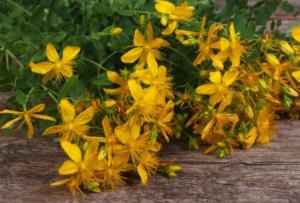 U kom mjesecu treba BRATI ljekovite biljke – Poklanjamo vam KALENDAR branja biljaka!